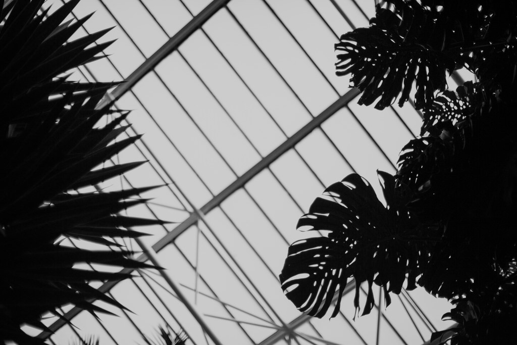 roof of the barbican conservatory wedding venue