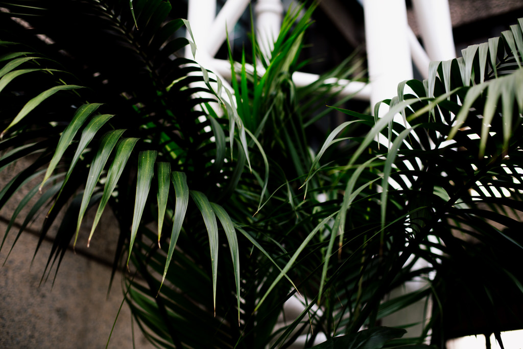 ferns inside the barbican conservatory wedding venue