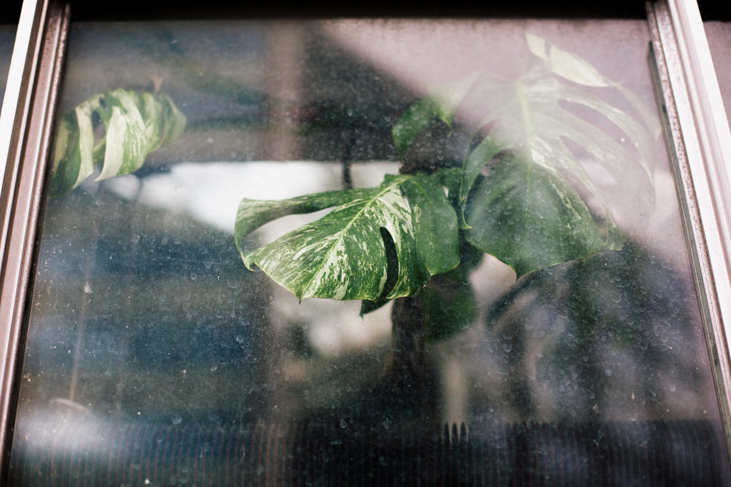 Plant through the window at the barbican conservatory wedding venue