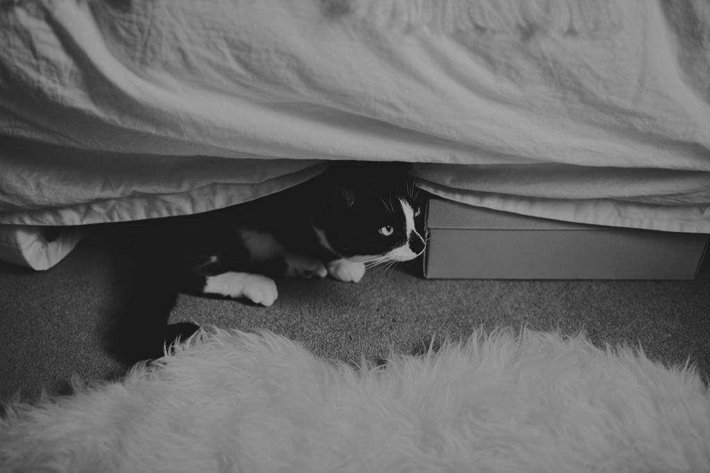Cat hiding at a London Elopement | Lisa Jane Photography | London Elopement Wedding Photography