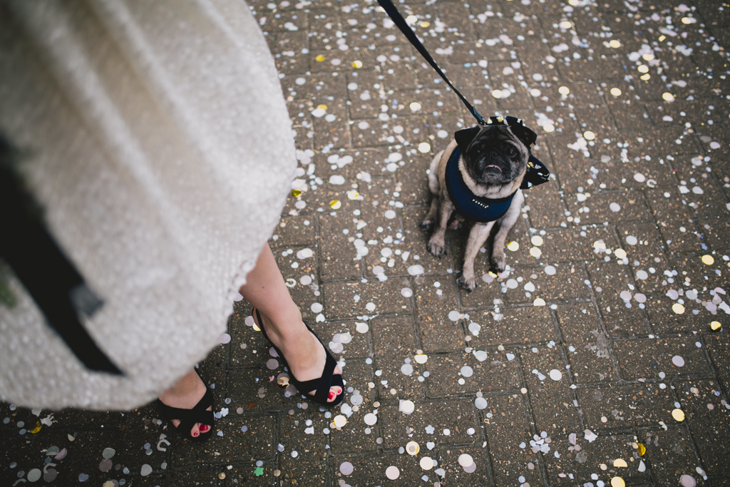 Bride with her pug outside Brighton Town Hall | Lisa Jane Photography | Modern Brighton Wedding Photography